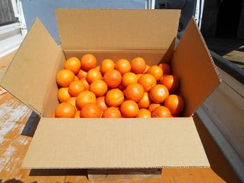 <たくさん食べたい方にオススメ>箱いっぱい超かわいいサイズ!約5kg